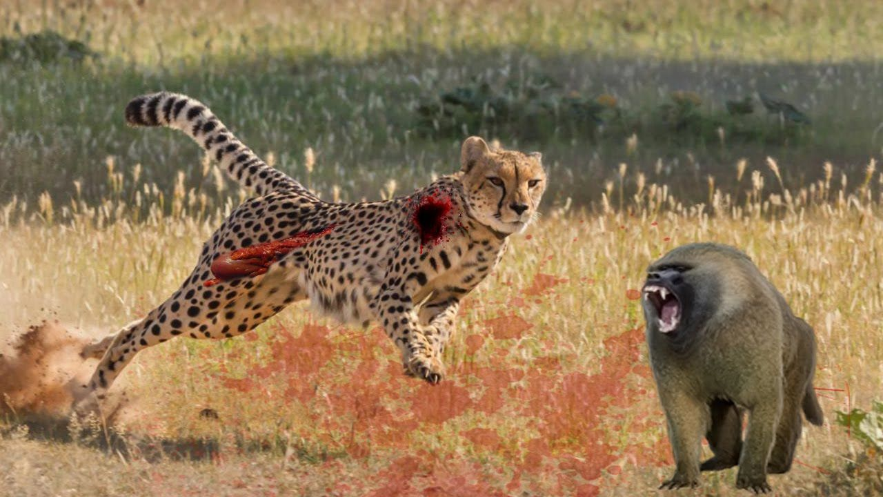 Top leopards fighting to death new
