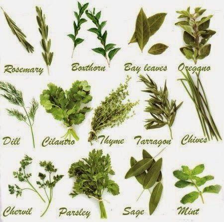 Southern California Garden Guide   Basic Gardening: Easy Herb Planting Guide
