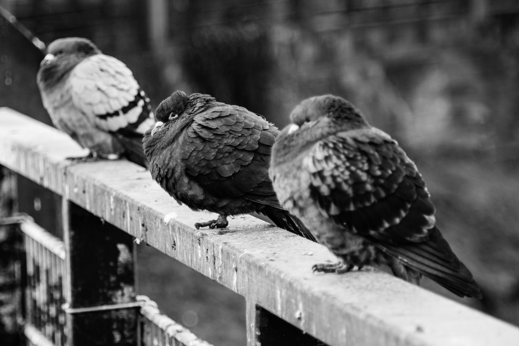 Pigeons on a Fence by Sebastian Schmidt on 500px
