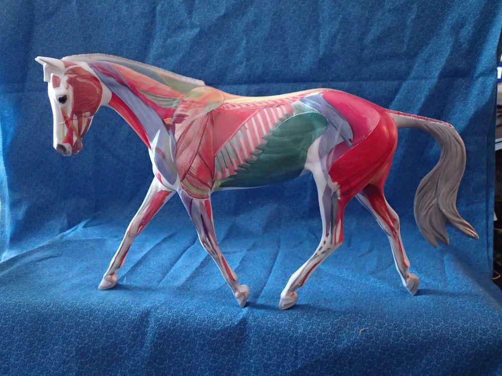 Odd Ooak Breyer Strapless Mold Horse Anatomy In Motion