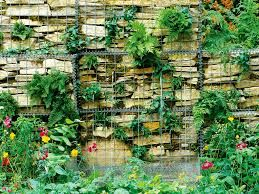 Image result for planting with gabions
