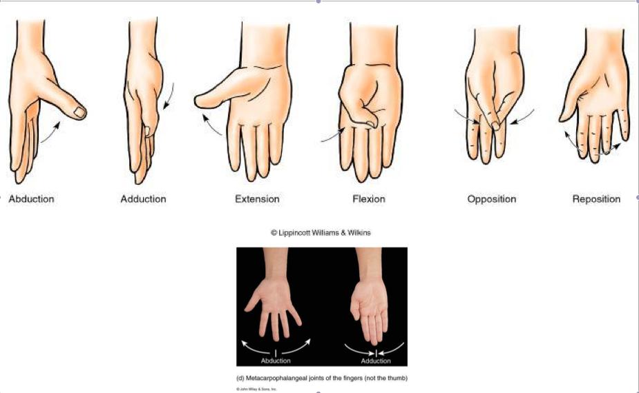 thumb movements | Med | Pinterest | Anatomy