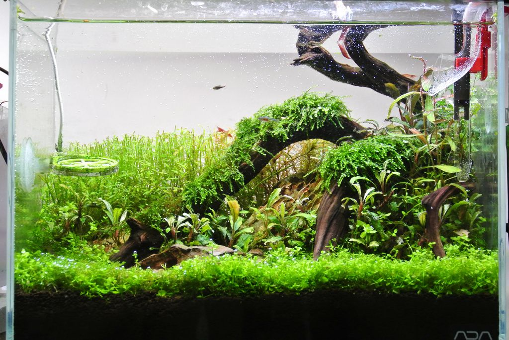 Přírodní akvárium