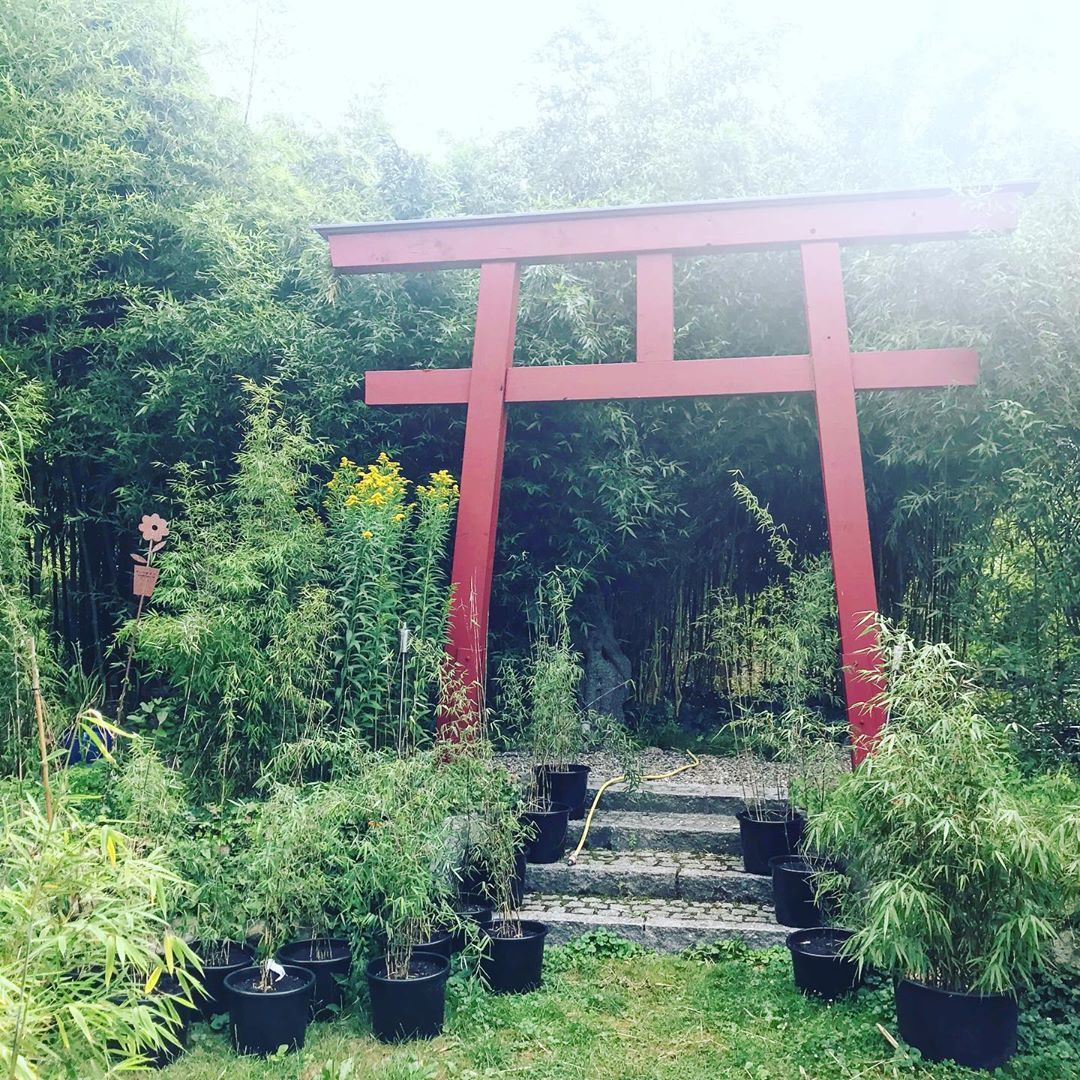 Torino Im Garten Torii Toriigates Bambus Bamboo Sichtschutz