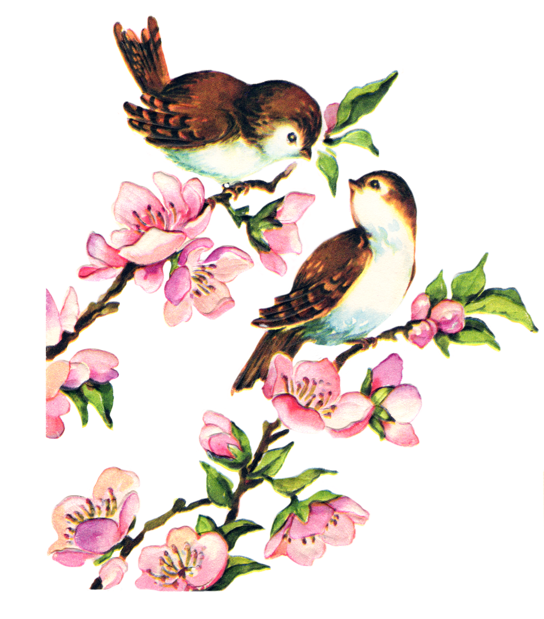 Воскресе, фон для открытки птицы