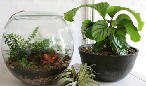 Little Lands Terrarium Melbourne Terrarium Shop Little Lands