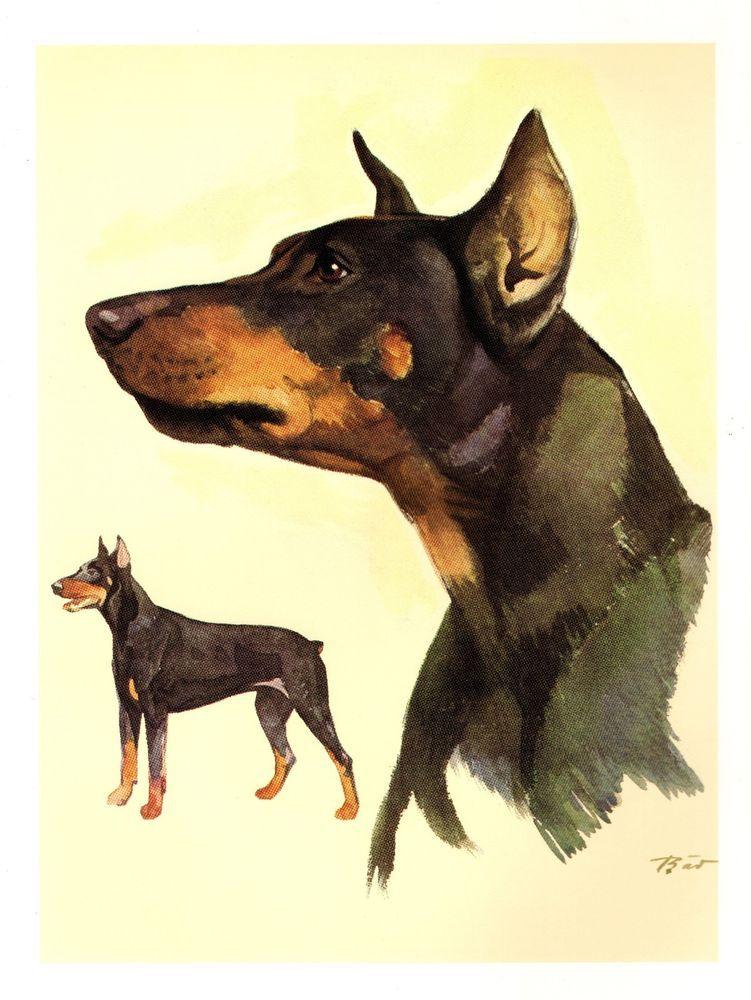 Vintage DOBERMAN Dog Print Gallery Wall Art Doberman Illustration ...