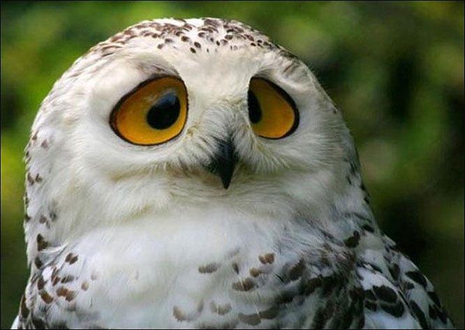 ~~owl~~
