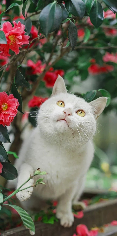 Pin by ʕ•ﻌ•ʔ on cuteness ♡ in 2020 Pretty cats, Cute