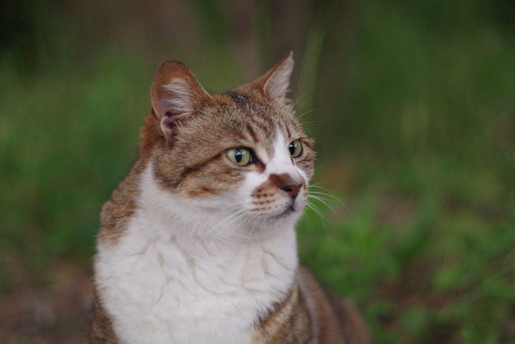 Tabby Cats Brown Brown Tabby Cat Flexible Negativity Cat