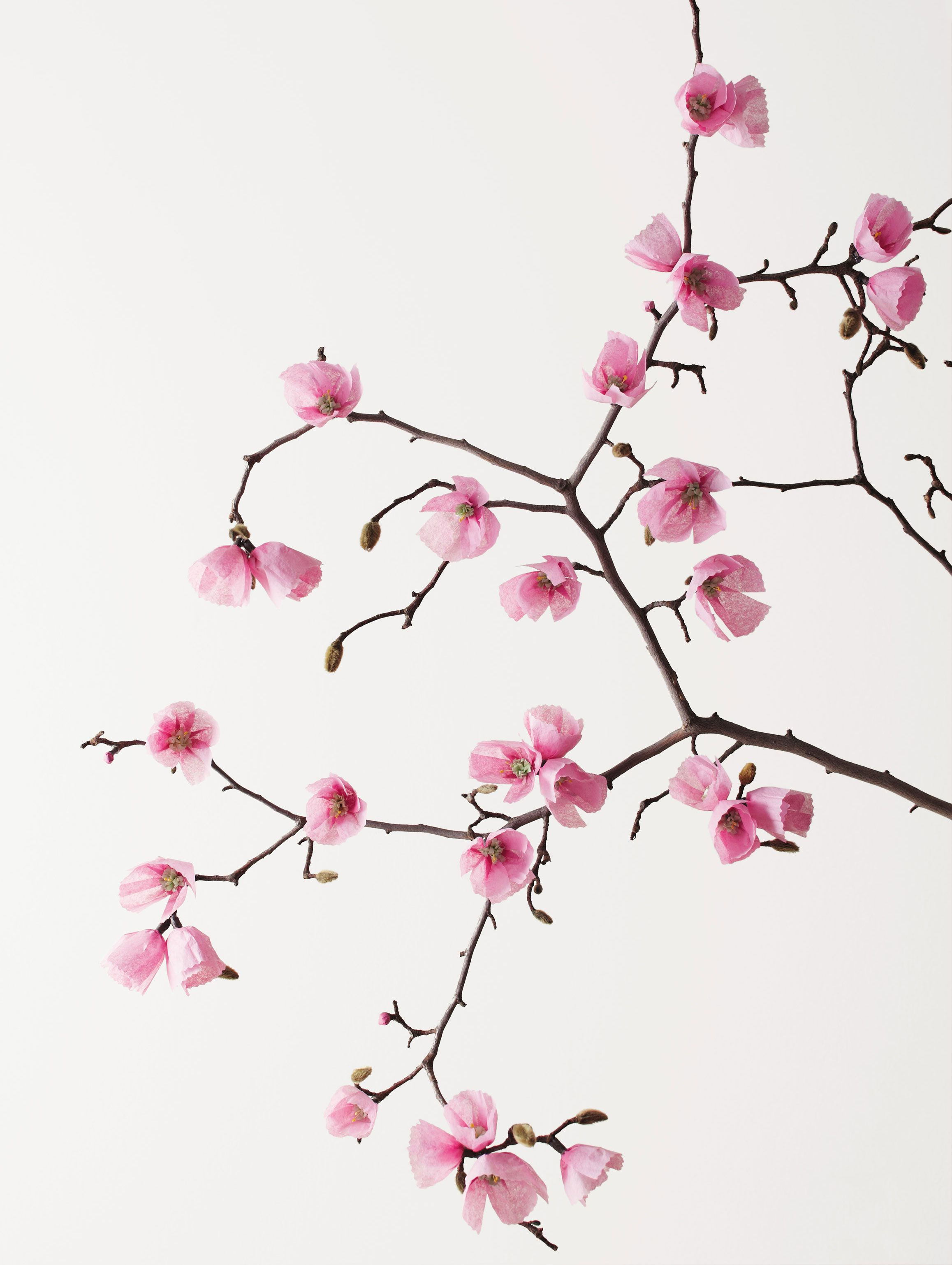 Cherry Blossoms From The Exquisite Book Of Paper Flowers Paper