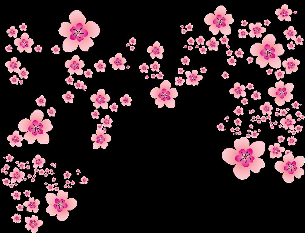 Cherry Blossom Plum Blossom Clip Art - Transparent Sakura ...