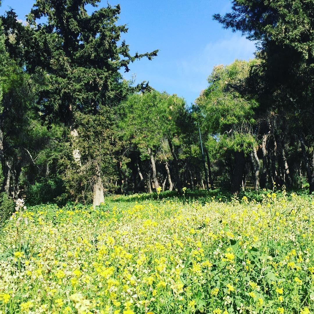63 Likes 1 Comments Nina Ioannidou Floral Design
