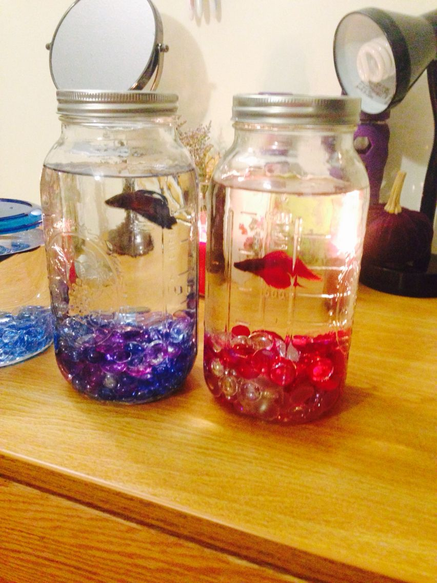 Mason jar fish bowls betta fish pinterest belleza