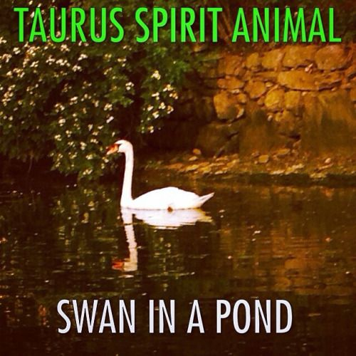 Aquarius Animal Spirit Taurus Spirit Animal: ...