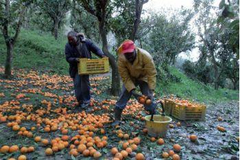 Agricoltura, sono 400mila i lavoratori costretti al caporalato: 25 euro per più di 12 ore di lavoro al giorno