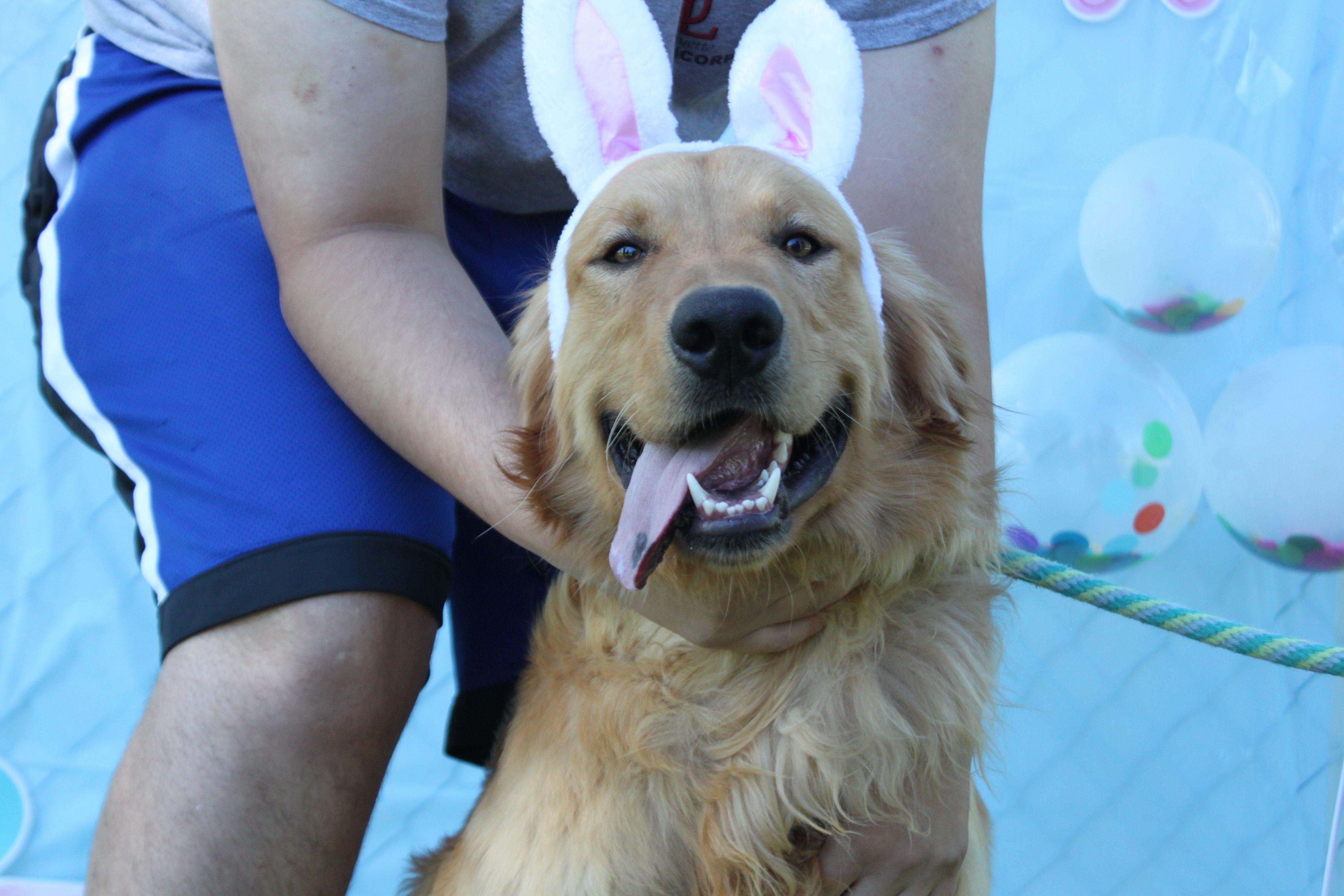 Adopt Boone On Petfinder Dogs Dogs Golden Retriever Golden Retriever