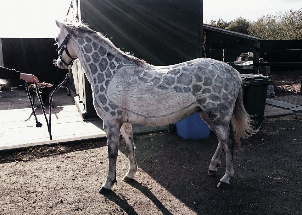 These clipping jobs are amazing!!! | Horses | Pinterest | Horse ...