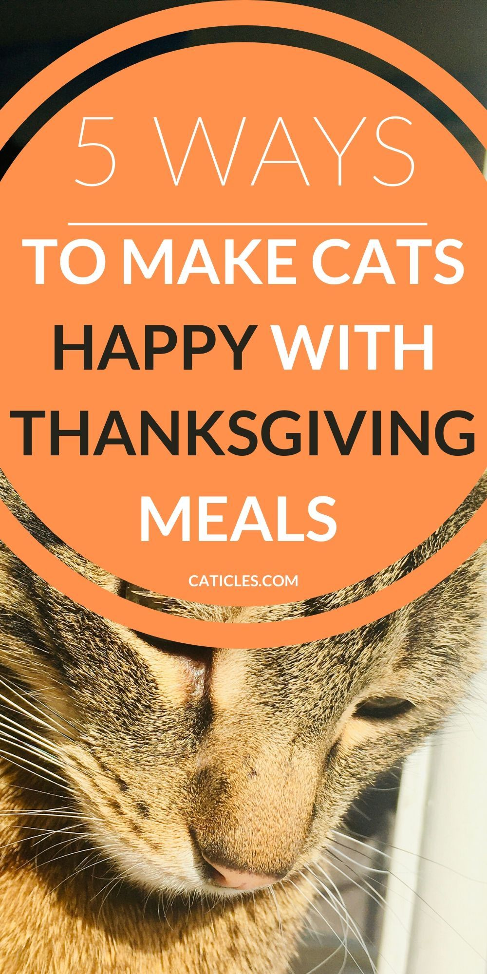 Thanksgiving Dinner for Cats in 2020 Cat problems, Cat