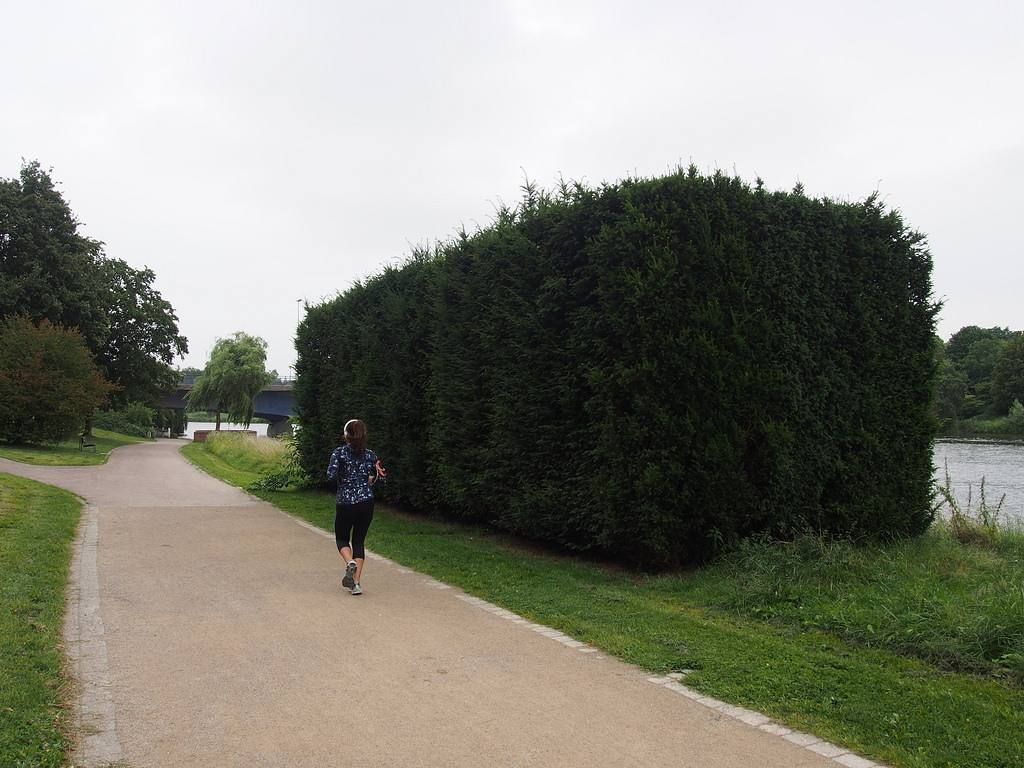 Ummmm...that big bush there that's a work of art: Rosemarie Trockels Less Savage Than Others a tree sculpture that treats its raw material as though it was wood or granite   only for the Skulpturproject of Münster. (More info in our blog)  #Germany #NRW #Muenster