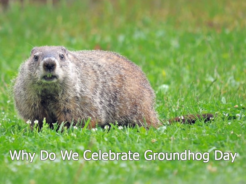 What do you know about Groundhog Day origins and traditions? There are many interesting facts related to this special day inspired by spring invocations from the earliest times. Read our article and observe the groundhog's mood!