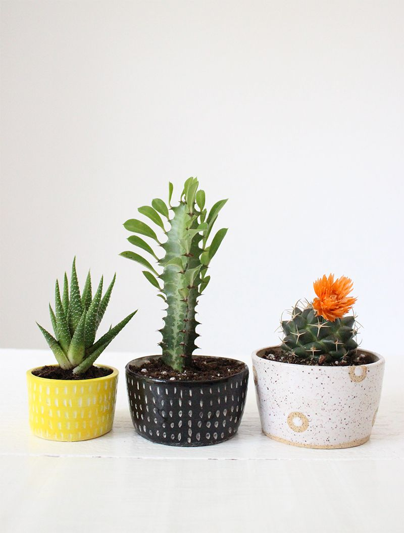small cactus and succulent handmade ceramic planters from baba