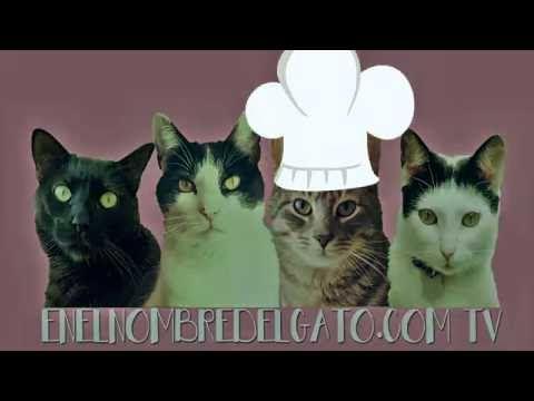 comida casera para gatos, receta de pavo con vídeo