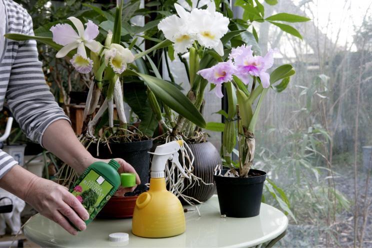 Wann Orchideen Düngen