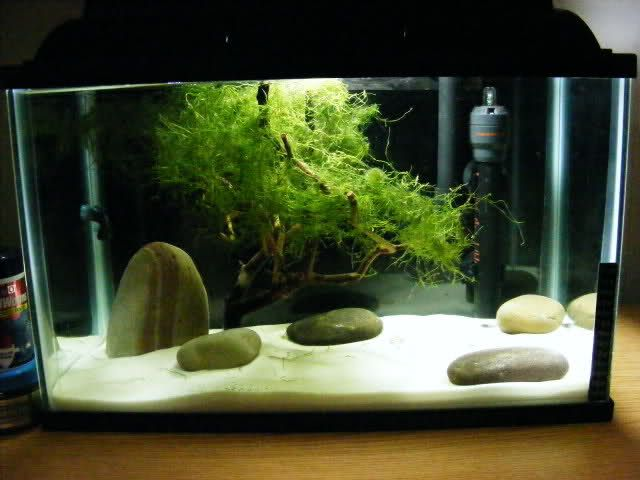 Zen garden 5 gallon the planted tank forum aquarium for Decoration zen aquarium