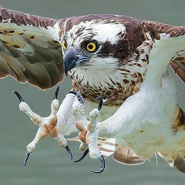 "Ready, aim & hopefully ""gottcha""!...Doris Birds"