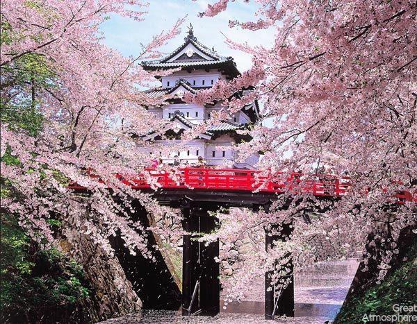 image result for japanese style bridges cherry blossom