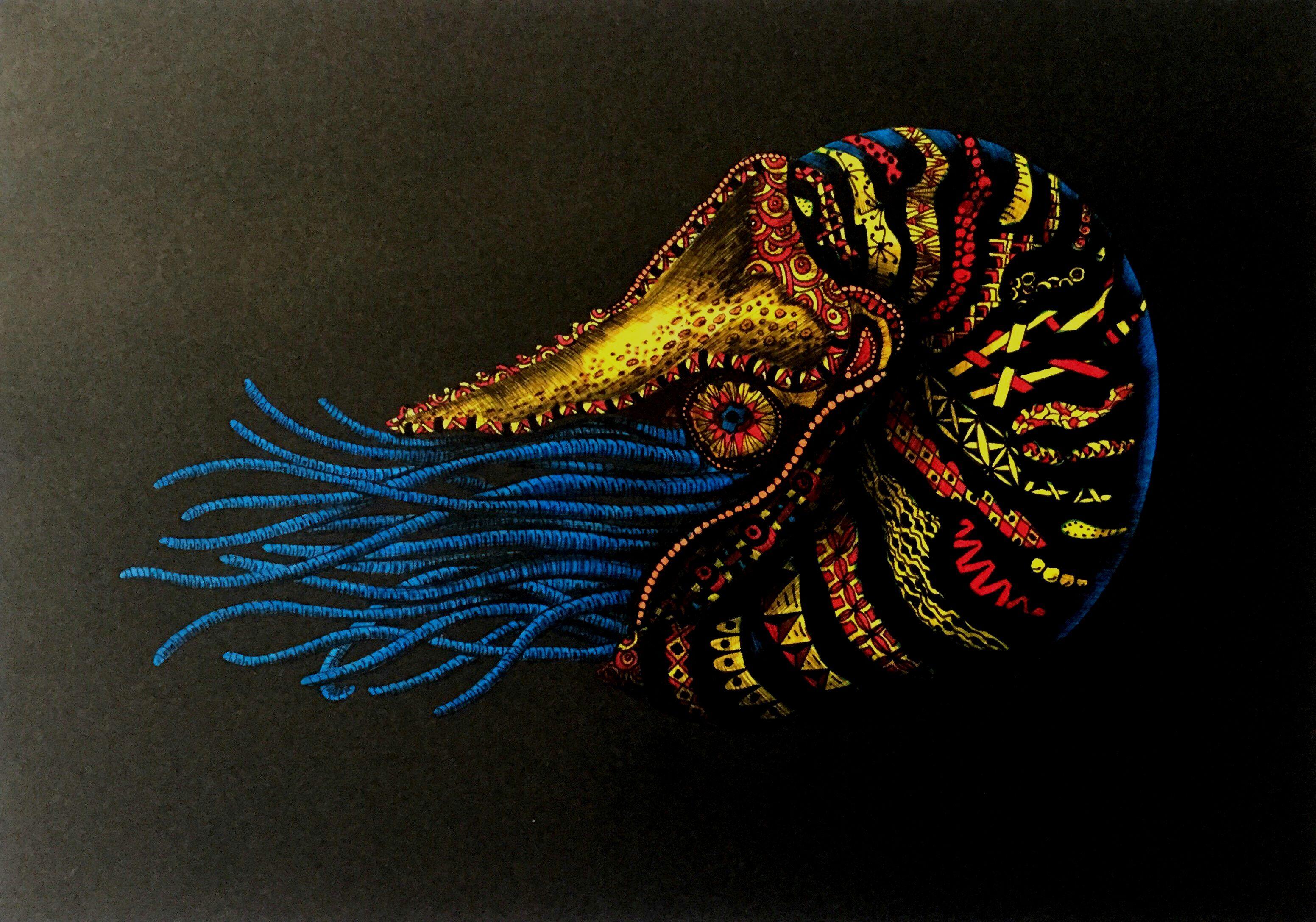 Pin by michael murphy on moray eel lion fish nautilus