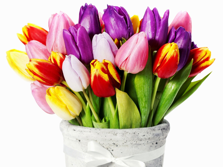 Тюльпаны De toutes les couleurs, Tulipe et Couleur
