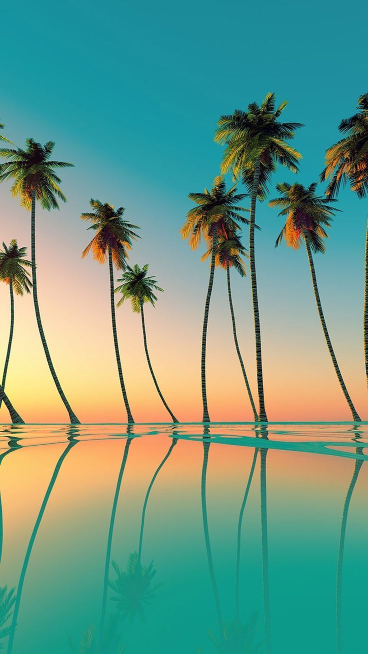 Tap And Get Free App Palm Trees On The Sunset Background