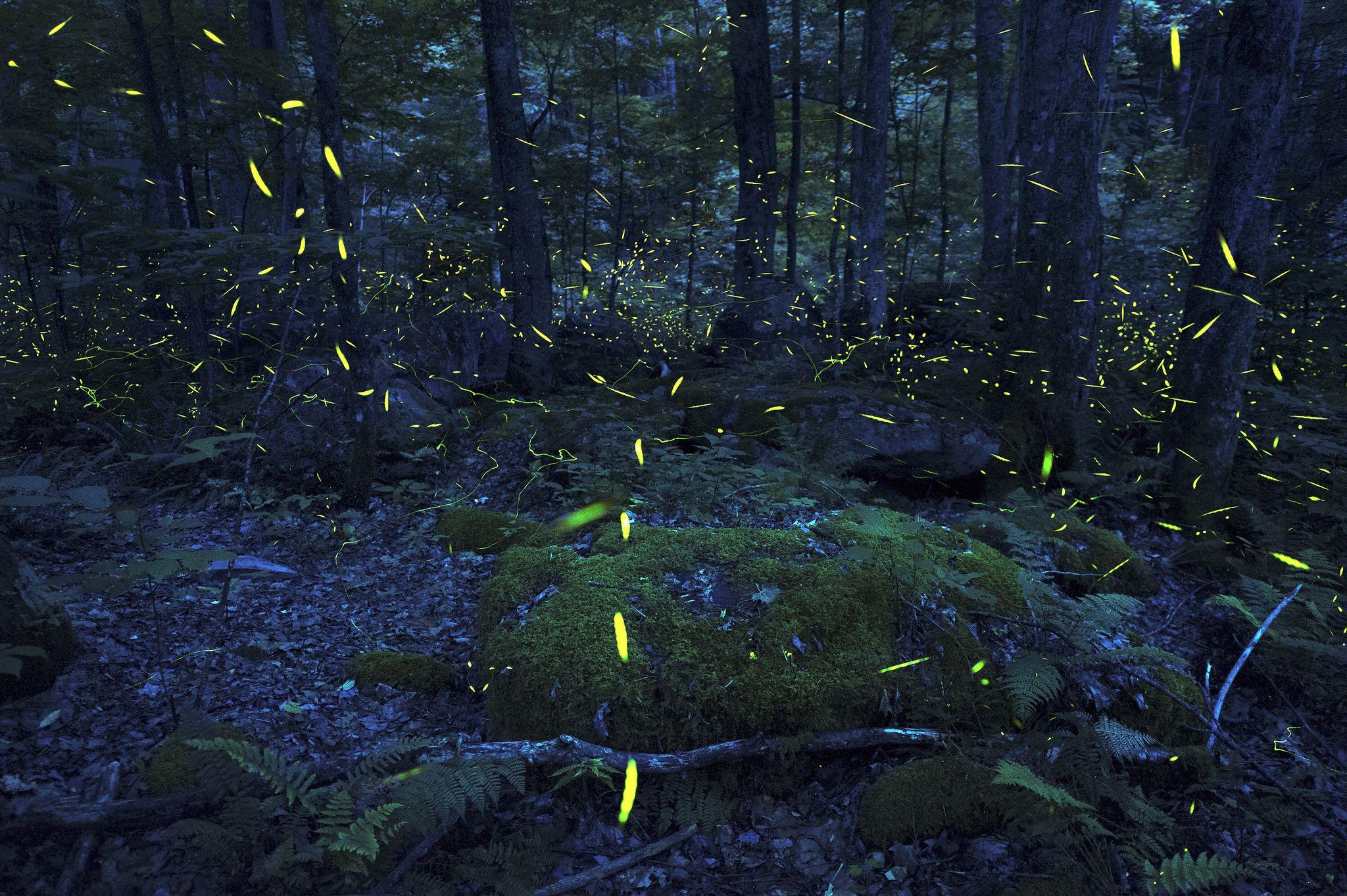 https://flic.kr/p/nNf8dd   Synchronous Fireflies of Elkmont