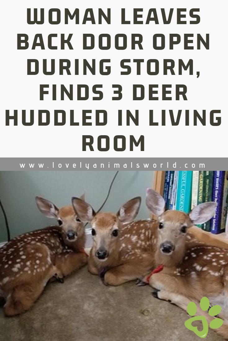 Woman Leaves Back Door Open During Storm, Finds 3 Deer