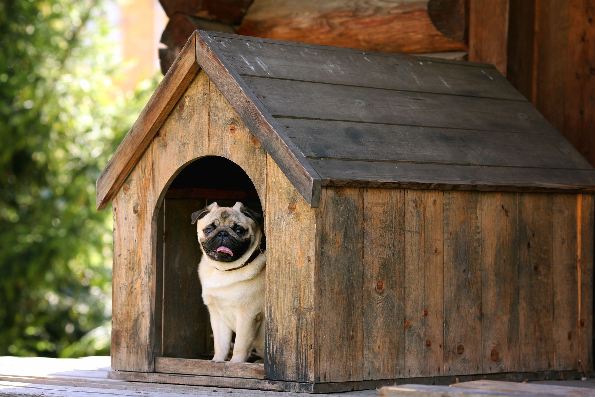 Skil Own Your Home Pets Doghouse Pug Cool Dog Houses Dog House Diy Dog Kennel Outdoor