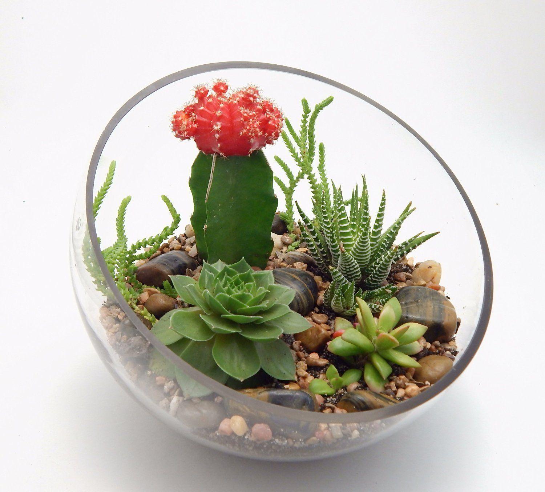 Succulent and grafted cactus large half moon glass terrarium kit succulants - Kit terrarium plante ...
