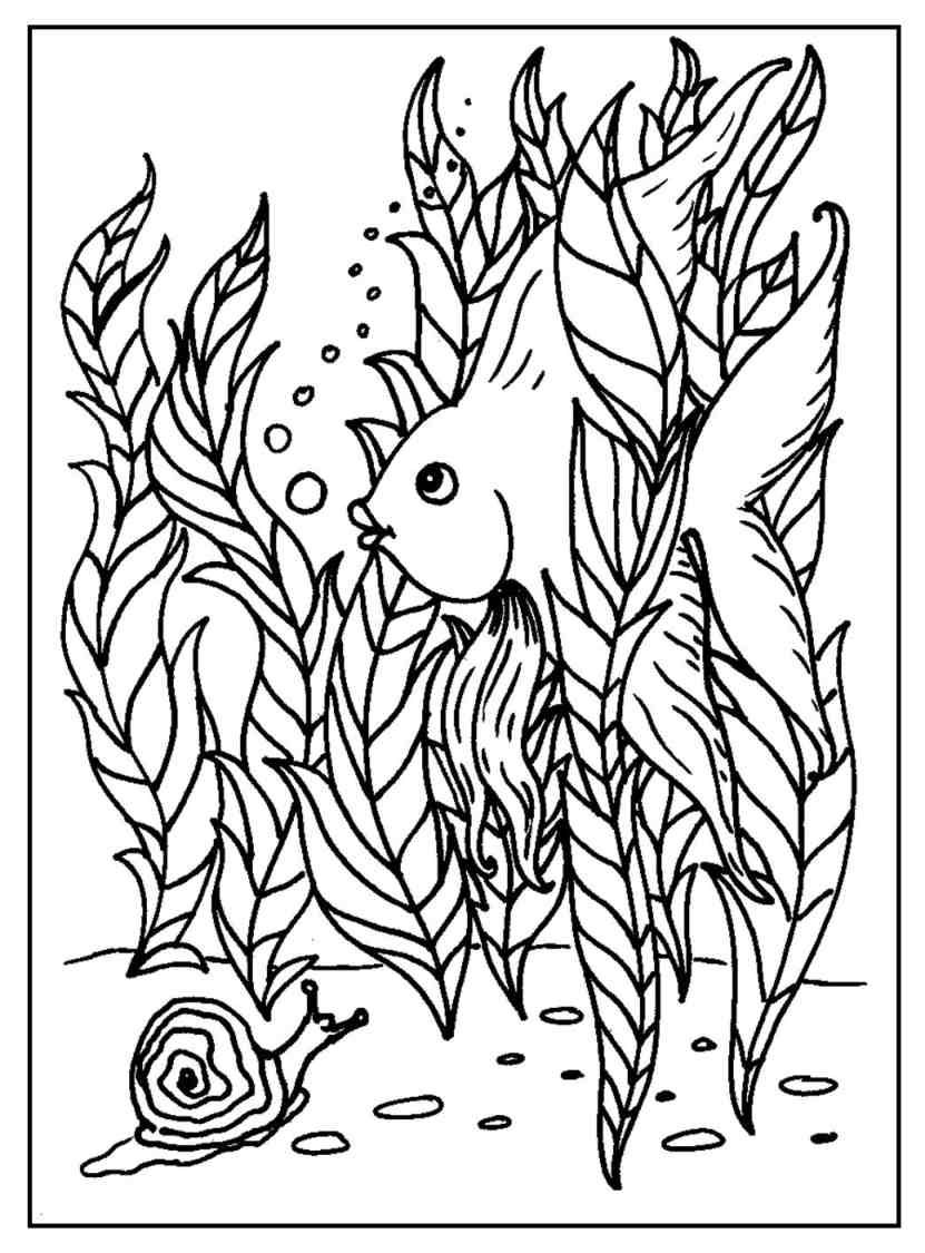Free intermediate 2 coloring pages   Fish coloring page ...