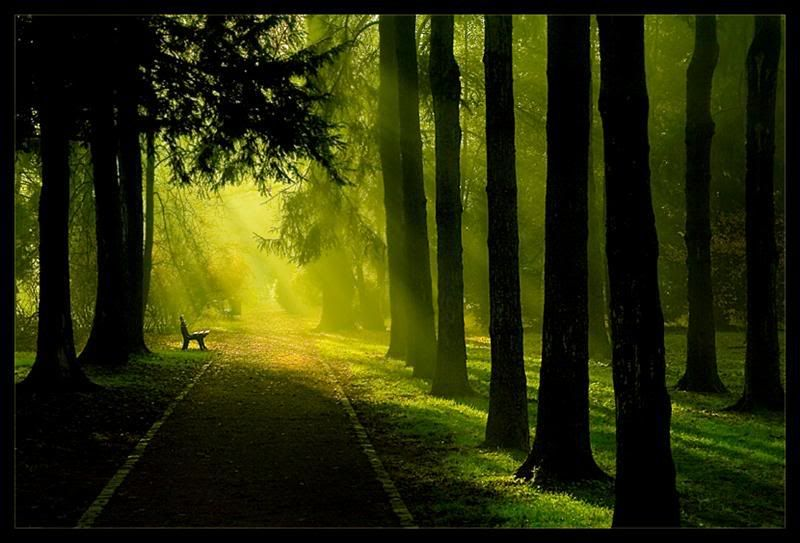 A walk into Fantasy
