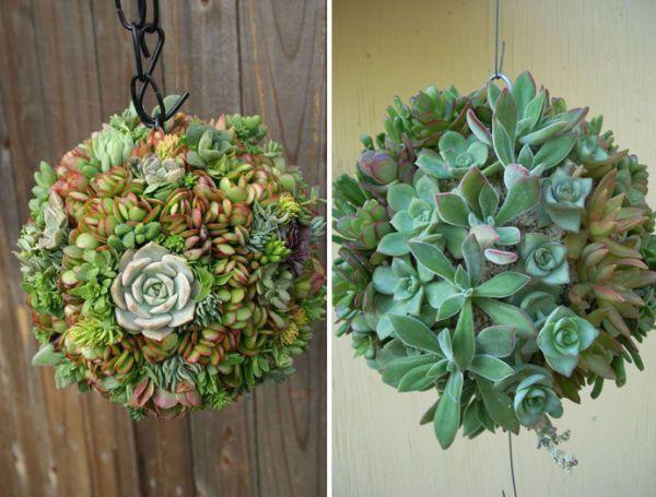 e09316485 Cómo hacer una esfera de suculentas | Jardin | Suculentas, Plantas y ...