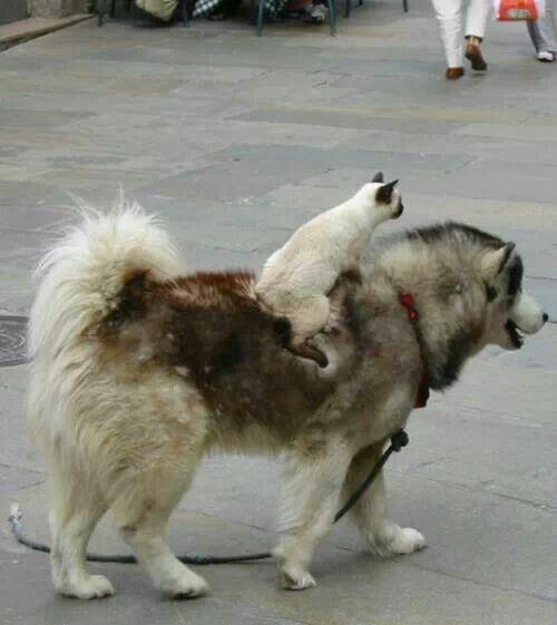 Gato a caballo!!