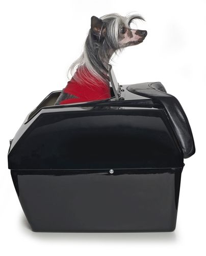 Large Motorcycle Dog Carrier Harley Pet Carriers Dog Carrier Dogs