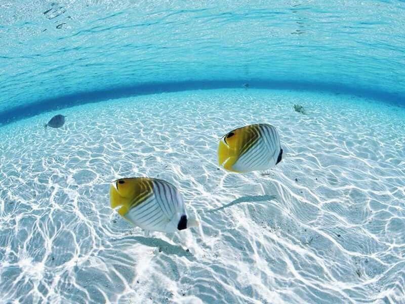 Peixes nas aguas transparentes das Maldives