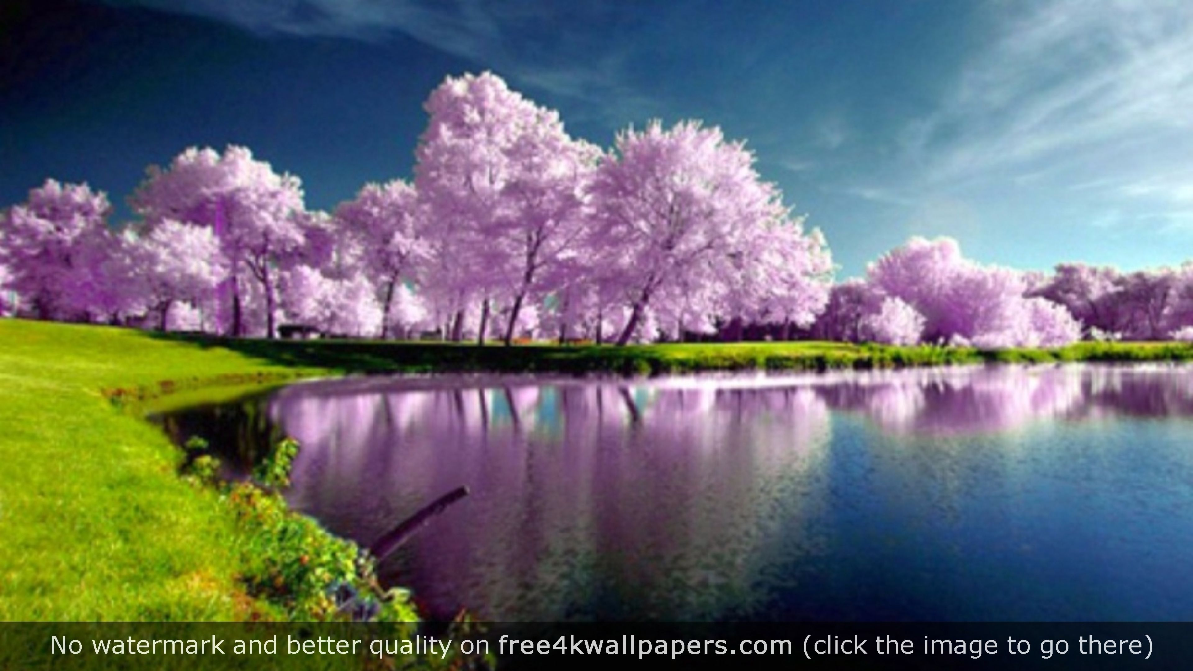 Purple Trees Nature Wallpaper Beautiful Photos Of Nature Nature Photography Nature Photos