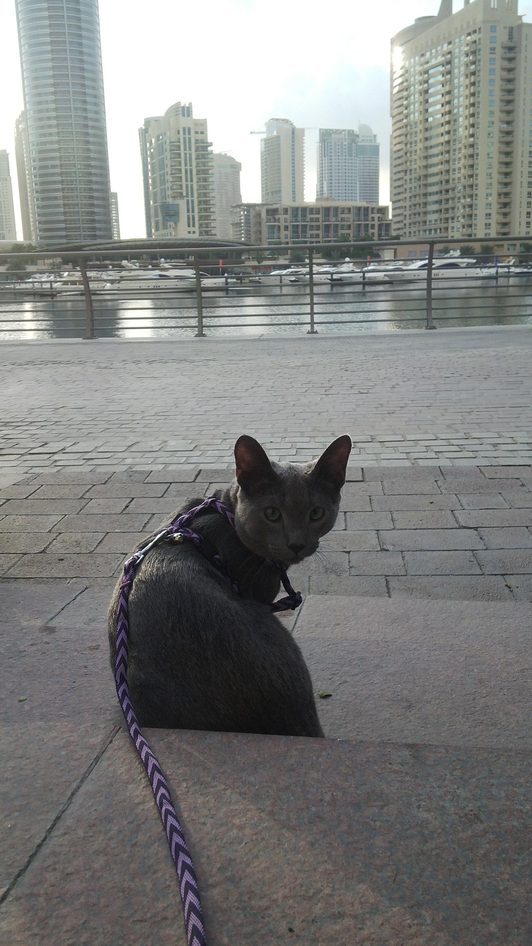 Enjoying my morning stroll
