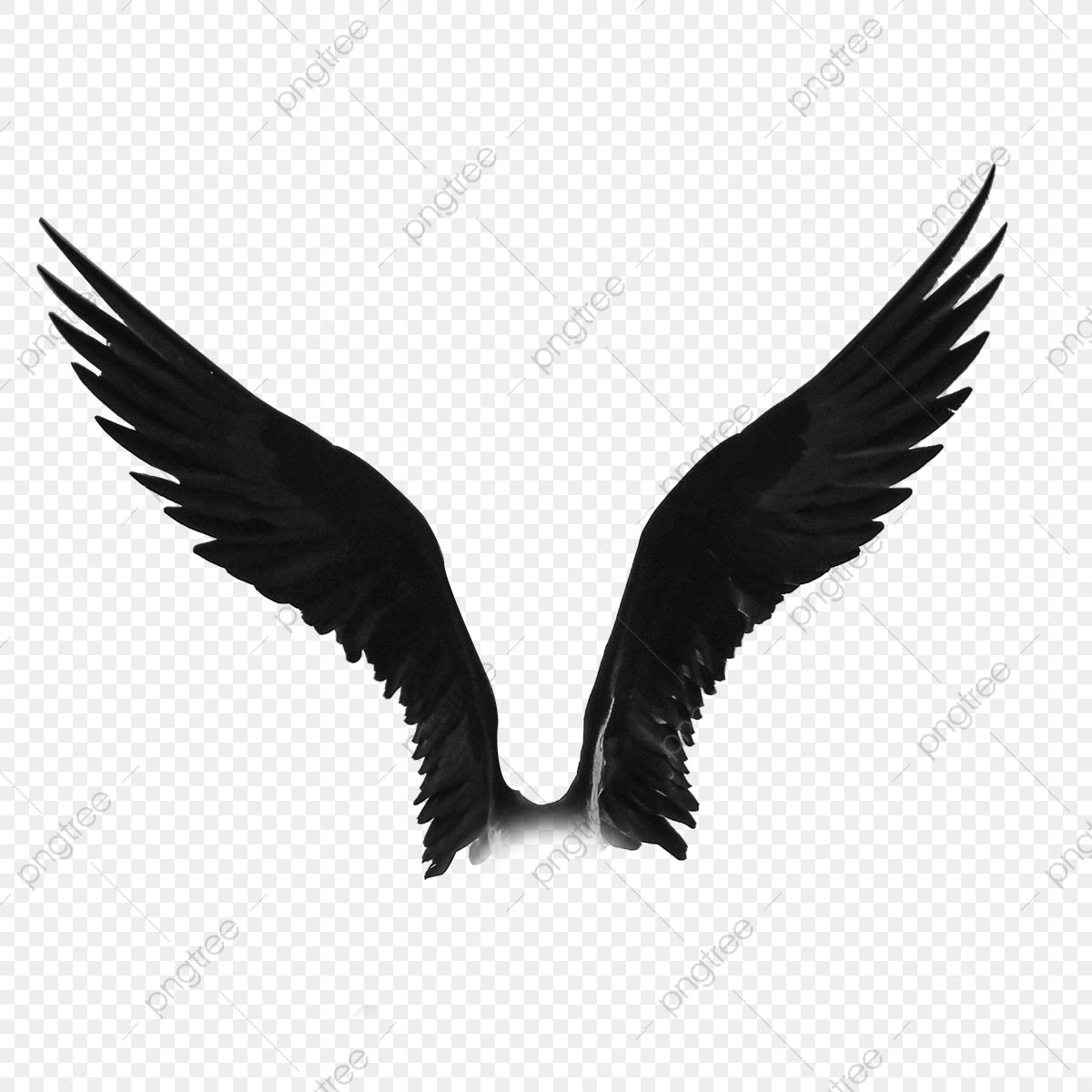 Download This Frigate Bird Wings Png Transparent Background Frigate Bird Png Png Clipart Image With Transparent Backgro Bird Wings Wings Png Angel Wings Png