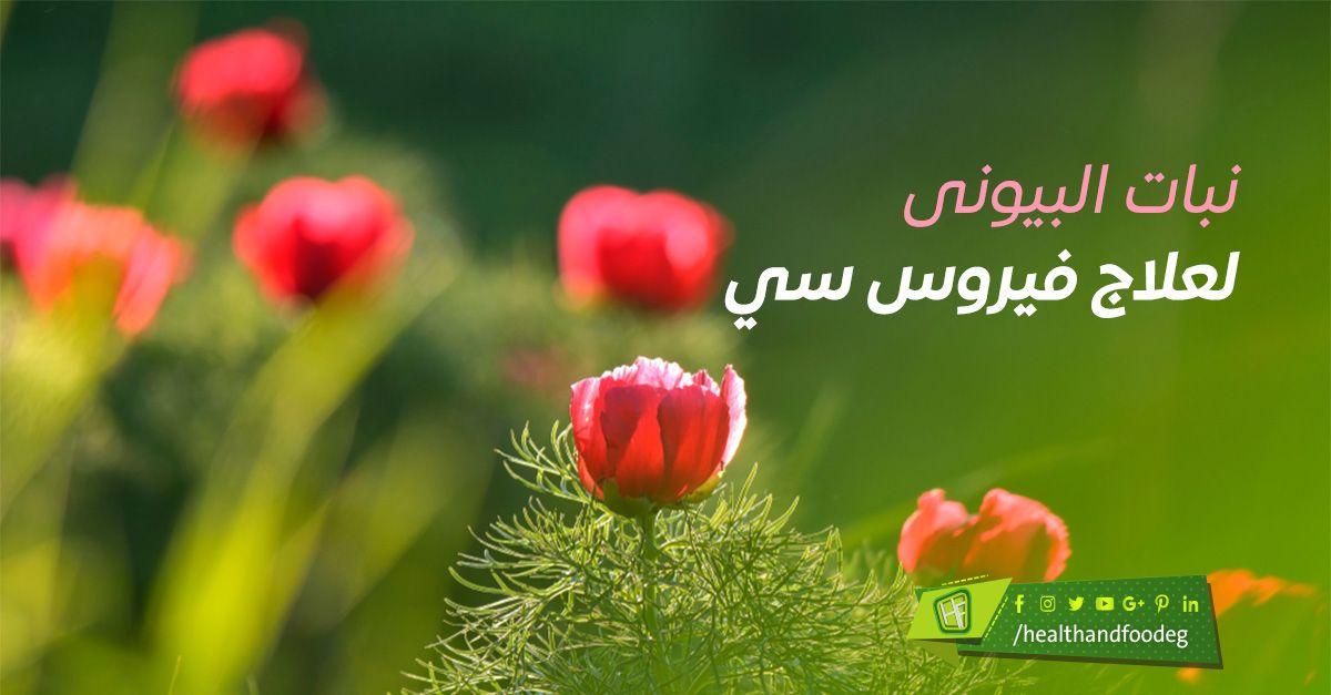 الدكتور احمد ابو النصر Plants