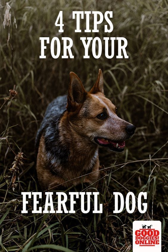 4 Tips For Nervous And Fearful Dogs Luxury Dog Stuff Dog