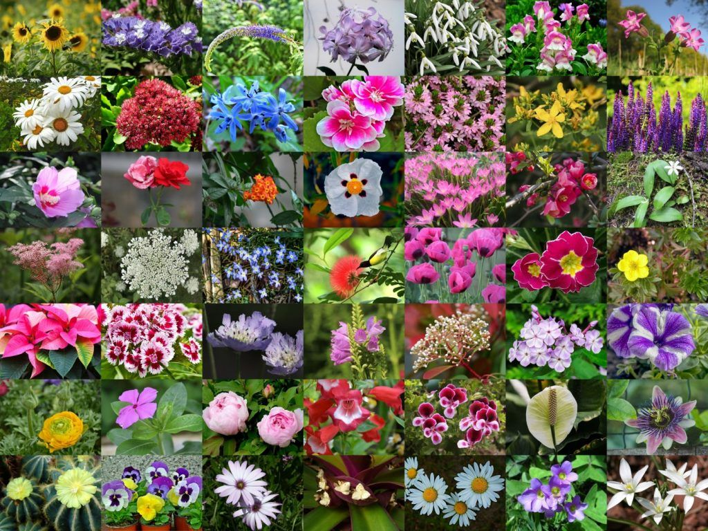 List Of 300 Flower Names A To Z with Images Flower names
